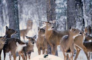 Deer crash 8